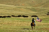 United States, South Dakota, Black Hills, Custer State Park, cowboy at bison roundup
