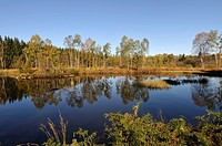 France, Haute Saone, Mille Plateau ponds Beulotte Saint Laurent, bog pond, autumn