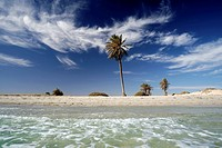 Palms on the beach, Djerba island, Tunisia, Maghreb, North Africa, Africa