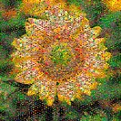 Mosaic of a Sunflower helianthus annuus composed of various nature photo tiles. Created using AndreaMosaic creditware. Larger files are available upon...