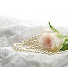 Pink rose with pearls on white lace.