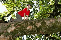 Boy climbing a deciduous tree