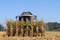 France, Bas Rhin, Diebolsheim, corn harvest