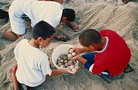 Conservationists and young volunteers relocate green sea turtle Chelonia mydas eggs from a public beach to a site on a protected beach. Miami Beach, F...