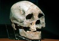 The skull of the Del Mar Man, determined to be around 48,000 years old, found in north San Diego, California.