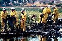 Workers at McNabey Marsh clean up after an oil spill. A leaking tank at the nearby Shell oil refinery drained approximately 400,000 gallons of crude o...