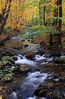 Stream in autumn, Ilse, Ilsetal valley, Harz, Saxony_Anhalt, Germany, Europe