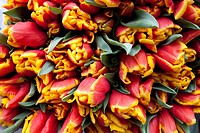 Bunch of flowers at a market stand, tulips (Tulipa)