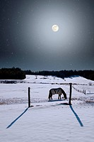 A horse grazes as a winter full moon rises in this composite photo.