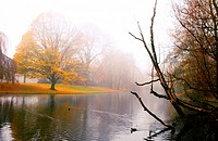 morning fog in the autumn park with yellow leaves