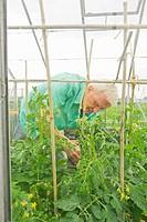 Farmer examining greenhouse plants