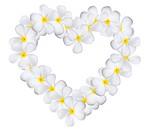 Plumeria flowers heart isolated on white background