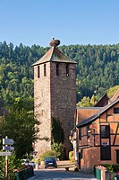 Stork nesting on top of a tower in Kaysersberg, Alsace, France, Europe