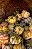 Carnival Squash in a basket