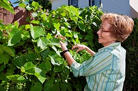 Senior woman looking at grapes while working in garden