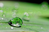 a drop on plant leaf with a tree inside
