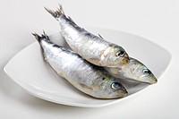 raw sardine