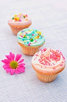 Delicious pastel coloured cupcakes with a spring daisy