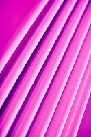 Full frame abstract of three dimensional pink lines