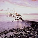 Driftwood on a rock beach in the morning