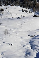 Curvy snow tracks