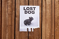 A lost dog flyer posted on a wooden fence