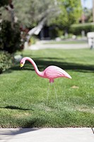 A plastic pink flamingo stuck in a lawn, close_up