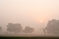 Misty morning landscape, Vrindavan, Uttar Pradesh, India