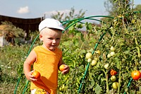 The happy boy holds tomatoes in the garden