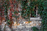 wall with leaves of grape