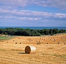 Haybales in rural field