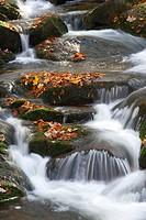 Ilse river in autumn, Ilsenburg, Harz National Park, Saxony-Anhalt, Germany, Europe
