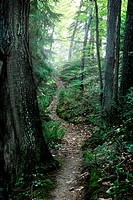 A winding trail covered in fallen leaves deep in a lush green sunny forest