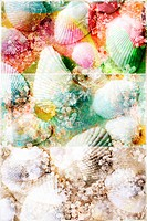 Conceptual image with sea shells