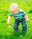 Little boy is playing on green meadow and touching dandelion