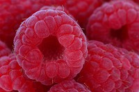 Ripe, organic raspberries close_up filling frame..Close_up of juicy, ripe, organic raspberries filling frame.