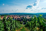 Vineyard and residential district in Stuttgart city center, Baden Wuertemberg, Germany.