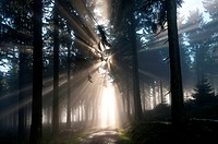 Sun rays penetrating the morning mist in a forest, Mt Feldberg in the Taunus range, Hesse, Germany, Europe