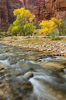 Virgin River, Zion National Park.Autumn along the Virgin River, Zion National Park Utah USA