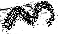 Woodcut image of a scary centipede insect.