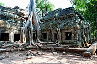 Angkor Ta Prohm, entwined tree roots and temples, Cambodia, Southeast Asia, Asia