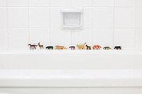 Toy animals on bath ledge.Queue of toy animals lined up on the edge of a bath tub