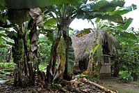 Wooden hut, Indian village, Amazonia, Brazil, South America