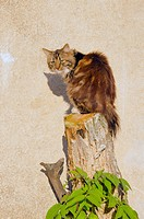 Cat sitting on cut tree trunk on background of brick wall.