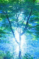 Leaves and sunlight reflecting from water