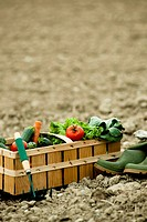 Basket of fresh vegetables on field