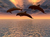 Three dolphins floating at ocean and drama sky