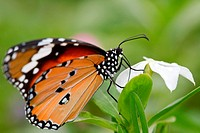 the butterfly fall on the flower in a garden outdoor.