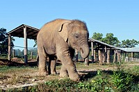 A baby elephant at a breeding sanctuary at the Royal Chitwan National Park in Nepal.