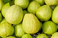 Guavas with water, green fresh fruit in tropical area.
